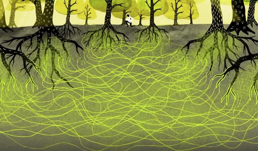 An illustration of many black barked trees with green leaves. Underground their light green root systems connect to each other. In the central and in the distance, is a figure of a person wearing white top and black pans kneeling down by a tree.